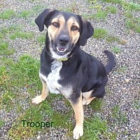 Adopt A Pet :: Trooper - Yreka, CA