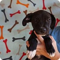 Adopt A Pet :: Aerin - Oviedo, FL