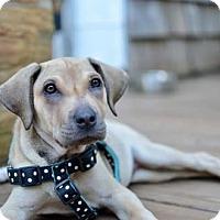 Adopt A Pet :: Ginger May - Graniteville, SC