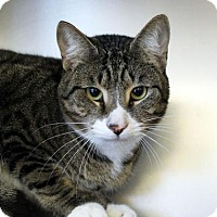 Adopt A Pet :: Winchester - Richmond, VA