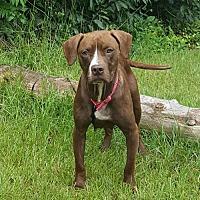 Adopt A Pet :: Trixie - Walton County, GA