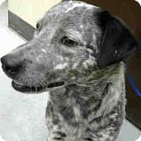 Adopt A Pet :: URGENT on 07/26 BIG BEAR - San Bernardino, CA