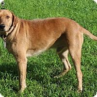 Adopt A Pet :: Wyatt - Columbia, TN