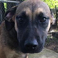 Adopt A Pet :: Daisy - Hartford, CT