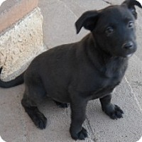 Adopt A Pet :: Gerald - dewey, AZ