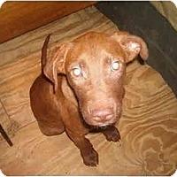 Adopt A Pet :: Harley - North Jackson, OH