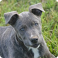 Adopt A Pet :: Ernie - Owasso, OK
