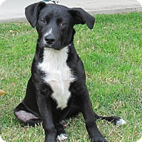 Adopt A Pet :: Wrangler - Kingwood, TX