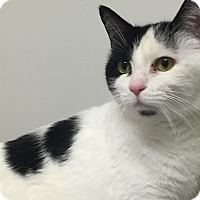 Adopt A Pet :: Daisy - Chesapeake, VA