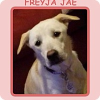 Adopt A Pet :: FREYJA JAE - Dallas, NC