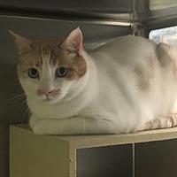 Adopt A Pet :: JB - Chandler, AZ