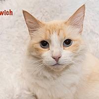 Adopt A Pet :: Mallow - San Juan Capistrano, CA