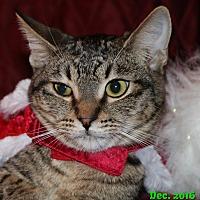 Adopt A Pet :: Nate - Encino, CA