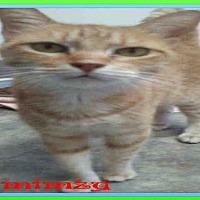 Adopt A Pet :: MIMZY - Fort Walton Beach, FL