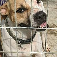 Adopt A Pet :: Lulu - Covington, TN