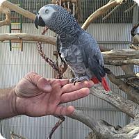 Adopt A Pet :: Pecan - Woodbridge, NJ
