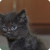 Adopt A Pet :: Earl - Medina, OH