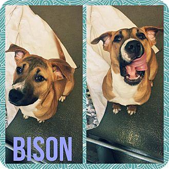Hound (Unknown Type) Mix Puppy for adoption in Steger, Illinois - Bison