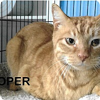 Adopt A Pet :: Cooper - Medway, MA