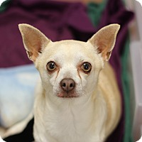 Adopt A Pet :: Mama Marionette - College Station, TX