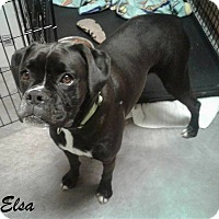 Adopt A Pet :: Elsa - Mooresville, IN