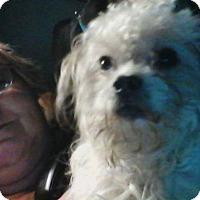 Adopt A Pet :: Prince - Rexford, NY