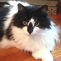 Adopt A Pet :: Scotty - Staten Island, NY