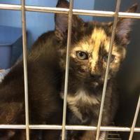 Adopt A Pet :: Uno - Savannah, TN