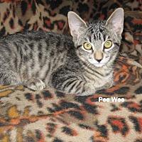 Adopt A Pet :: Pee Wee - Parlier, CA