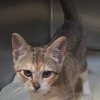 Adopt A Pet :: Savannah - Americus, GA