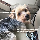 Adopt A Pet :: Murphy