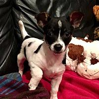 Adopt A Pet :: Ricki - Thompson, PA