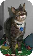 Domestic Shorthair Cat for adoption in Marietta, Georgia - Max #3
