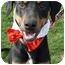 Photo 1 - Doberman Pinscher/Rottweiler Mix Dog for adoption in Sacramento, California - Trooper loving