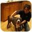 Photo 3 - American Pit Bull Terrier/American Pit Bull Terrier Mix Dog for adoption in Bellflower, California - Dulci