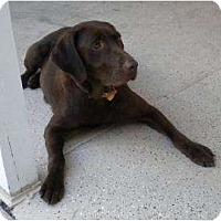 Adopt A Pet :: Angel - Altmonte Springs, FL