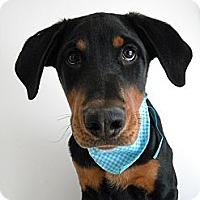 Adopt A Pet :: Parker - Monteregie, QC