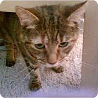 Adopt A Pet :: Mars - Scottsdale, AZ