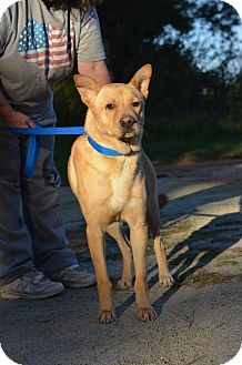 Husky/German Shepherd Dog Mix Dog for adoption in Washington, Georgia - Pup Pup