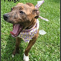 Adopt A Pet :: Paige - Houston, TX