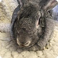 Adopt A Pet :: Camille - Idaho Falls, ID