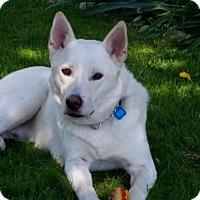 Adopt A Pet :: Taz - Saskatoon, SK