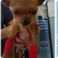Adopt A Pet :: Tico - Ogden, UT