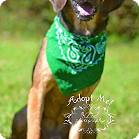 Adopt A Pet :: Jenkins - Fort Valley, GA
