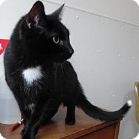 Adopt A Pet :: Fancy Pants - Waupaca, WI