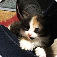 Adopt A Pet :: Cassia - N. Billerica, MA