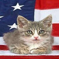 Adopt A Pet :: OTIS - Alameda, CA