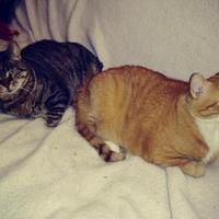 Adopt A Pet :: Tanzi - Newton, IA