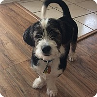 Adopt A Pet :: Boogie - Slidell, LA