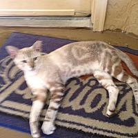 Adopt A Pet :: Kioshi - West Palm Beach, FL